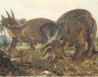 1955 triceratops paleontology print - Wall decor, prehistoric extinct animal, dinosaur - 62 years old German vintage illustration (C403)