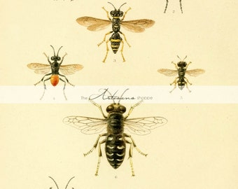 Digital Download Printable Art - Hornets Bees Insects Vintage Antique Art Image - Paper Crafts Scrapbook Altered Art - Flying Insects Art