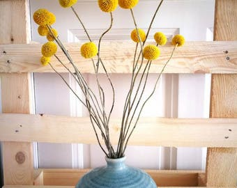 200X Offer of the month dried Craspedia, Billy Balls, Billy Buttons, craspedia bouquet, yellow round flower, flower arrangement
