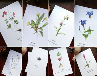 Burren Flora Series: A6 Illustration Print Pack