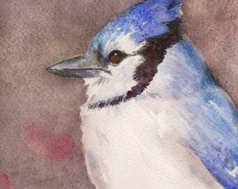 Blue Jay Watercolor, Original Watercolor