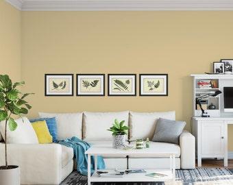 Fern Prints, Fern Wall Art, 4 Print Set, Botanical Print Set, Fern Illustrations, Housewarming Gift
