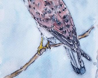 Kestrel art falcon painting original watercolour painting wildlife bird art European kestrel