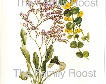 Botanical Plate 145