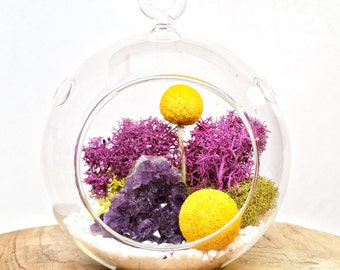 DIY Amethyst Crystal Cluster Air Plant Terrarium Kit ~  4.5 Clear Glass Hanging Terrarium, accessories,  and Tillandsia Plant CHRISTMAS GIFT