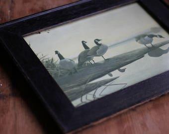 Sweet Vintage Canada Geese Framed Print