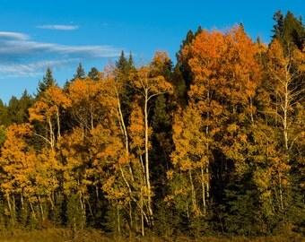Autumn Hill, Metal Prints