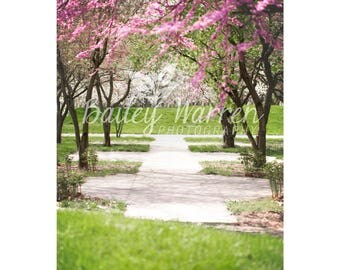 Photography Prop Digital Backdrop for Photographers - Spring Flowering Trees Digital Backdrop