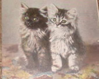 "Vintage Kitten Postcard ""Sooty and Sweet"""