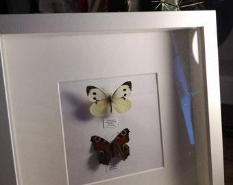 White Deep frame boxed butterflies