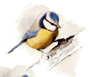 Blue Titmouse