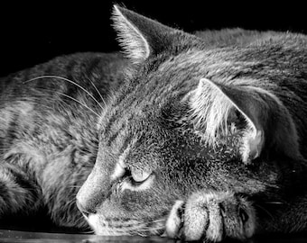 Black and white PRINTABLE cat Photography-Fine Art Photography-print-Cats-Photo-Photos-Download-Print-wall Decor