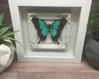 Blue Mountain Glory Butterfly Shadow Frame Box