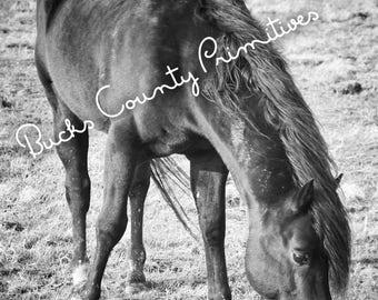 B&W horse professional print