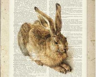 rabbit VI dictionary page print