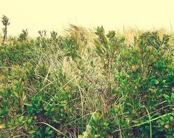 Minimalist Decor - Beach Photograph - Beach Dunes Art Print - Cape Breton - Nova Scotia - Minimal Art - Nature Photography - Green - Foliage