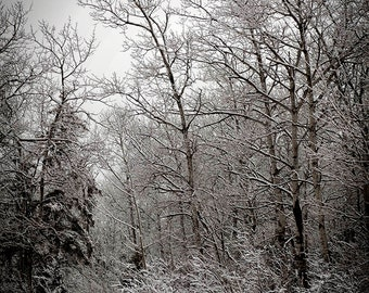 snow winter photograph trees landscape photography woodland home decor