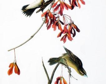 Vintage Audubon Bird Print, Bobolink, Meadowlark, Rustic Country Home Decor, Bird Book Page, Collectible Nature Wall Art