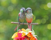 RESERVED for SARAH and JAY -  Tropical Conure Love Birds handmade wedding cake topper