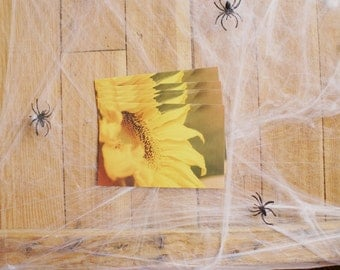 Sweet Sunflower - Set Of Five Postcards