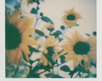 Yellow Daisies Polaroid Printed Photo - Decorate with a vintage feel - Free Domestic Shipping