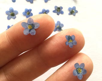 Pressed Flowers Forget Me Not. Dried Small Pressed Pastel Colour Petals. Loose. Tiny Real Mixed Shapes Of Blue Dried Flowers from mirrymirry
