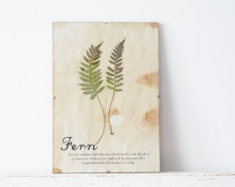 Pressed Herbs- Fern in Frame (4)