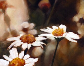 Original Painting, Oil Painting, Daisy Oil Painting, Daisies, Flower Painting, 8x8