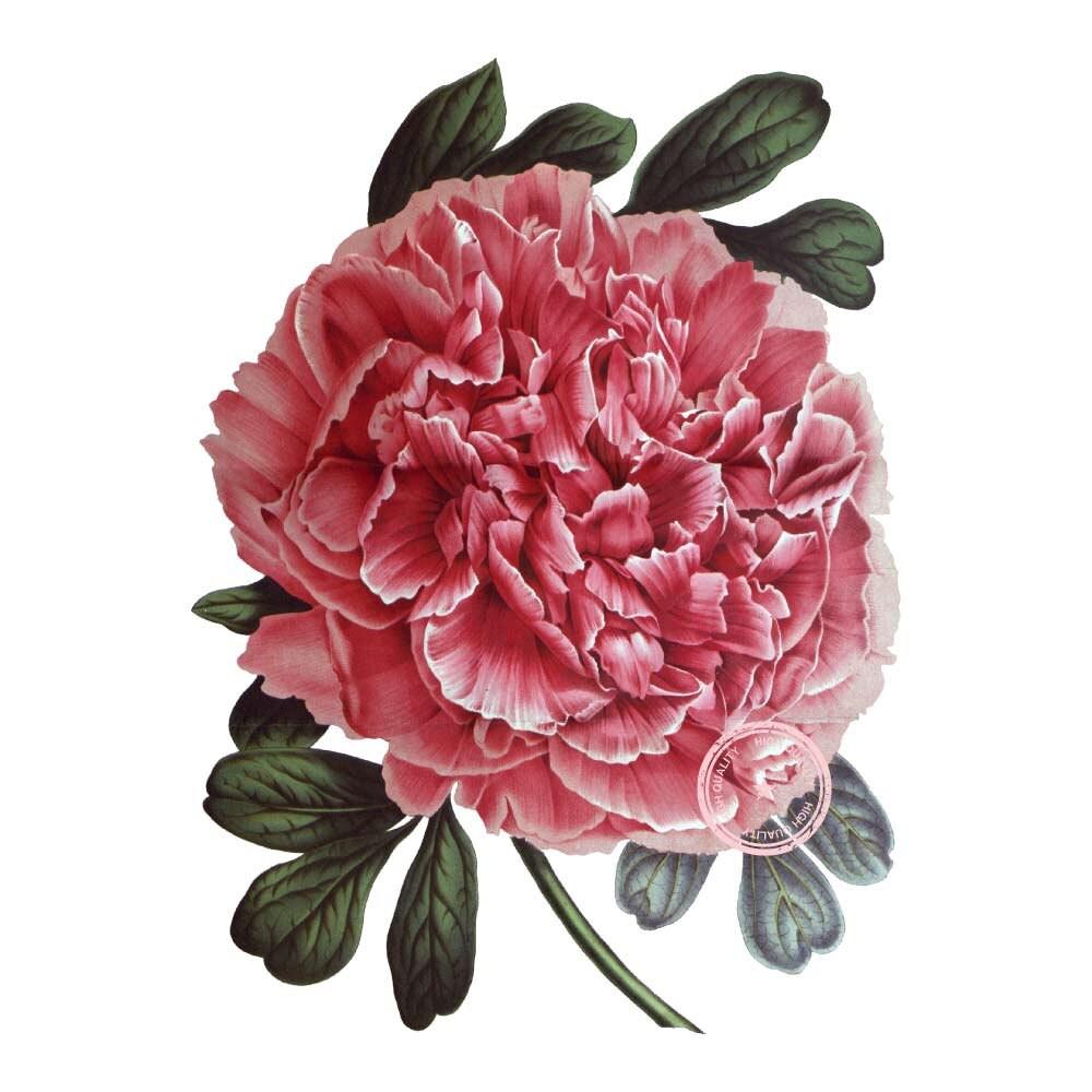 Tree Peony Flower Clip Art- Vintage Floral Clipart- Plant ...