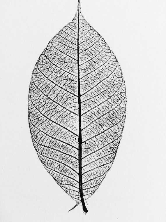 Leaf Print, Leaf skeleton print, from Rubber Tree. Original hand pulled, botanical leaves, 9x12 inches, Natural geometry, Natural Patterns