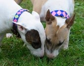 CUSTOM DOG COLLAR with Grosgrain Ribbonwork