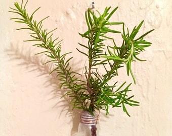 Up-Cycled Hanging Lightbulb Vase