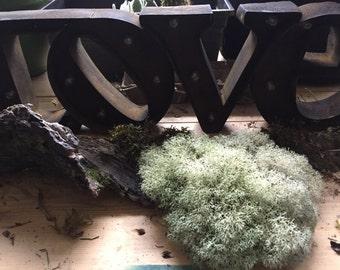 Live Rustic Appalachia Reindeer Moss (Lichen), 1 Quart