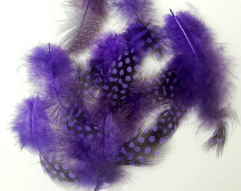 10 Purple Feathers Guinea Fowl Feathers Bird Feathers Spotted Dotted Real Feathers For Crafts Real Bird Feathers Real Feathers For Crafts