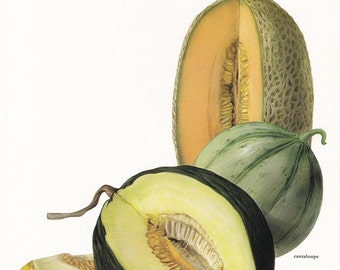 Melon melons vintage botanical art print fruit food kitchen decor by Marilena Pistoia 8 x 11 1/4 inches
