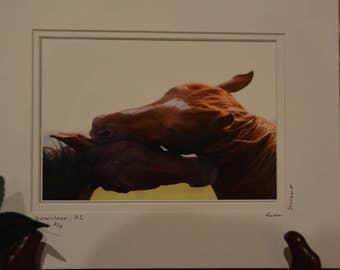 Horses, farm, paddock, riding horses, racing horses