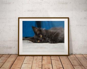 Maine Coon Kitten Print