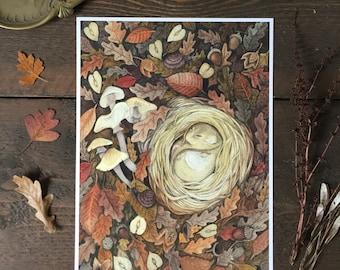 Dormouse A4 Giclee Print - autumn woodland