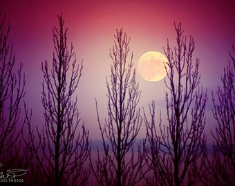 Moon print, twilight, full moon, moon picture, lunar photography, pink decor, purple decor, fine art photography,framed print, mounted print