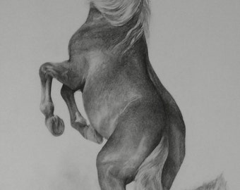 Horse stallion. Original pencil drawing. size A4. Free shipping