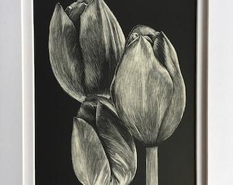Framed Tulip Scratchboard Art Etching 5x7