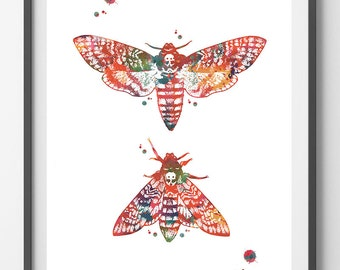 Moth Watercolor print Death's head Moth poster insects art enthomology art hawk moth print sphinx moth giclee print wall art gift