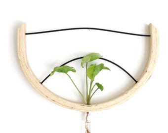 Ivy creeper, ivy plant, wall planter, plant hanger, hanging vase, wall vase, reclaimed wood, wooden vase