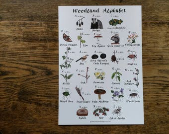 Woodland Alphabet art print (A4) by Alice Draws The Line, featuring forest flora and fauna illustrations. Alphabet poster