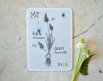 Muscari - Card