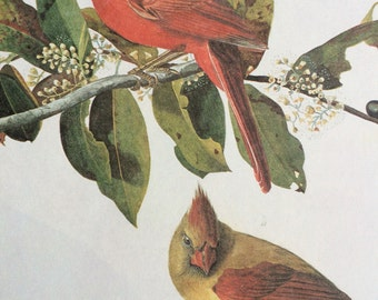 1966 CARDINAL Original Vintage Audubon Print, Matted and Ready to Frame 14 x 11 inches, Bird Decor, Vintage Decor, Ornithology,