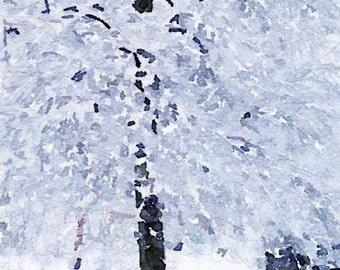 Snowy Tree, Burlington, MA