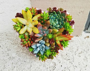Lovely Pink rustic heart glass bowl with living succulent arrangement ( valentines day/ mothers day/ birthday/gift)