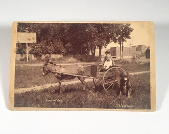 Cute Cabinet Card of Siblings on Donkey Cart with Dog, 19th Century Antique Photograph