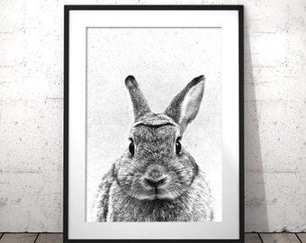 Nursery Rabbit Print, Rabbit Baby Nursery, Rabbit Print Decor, Printable Rabbit Art, Rabbit Photo, Nursery Wall Art, Rabbit Poster, Bunny